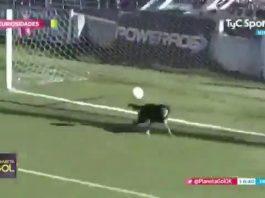 Anjing Liga Argentina